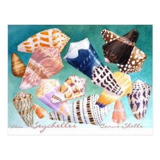 Seychelles Conus Shells Postcard