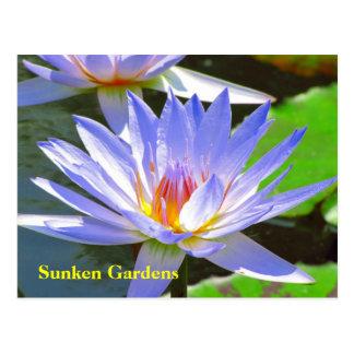 SG Blue water Lily #106N  0106 Postcard