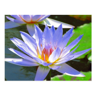 SG Blue water Lily #12N  012 Post Cards