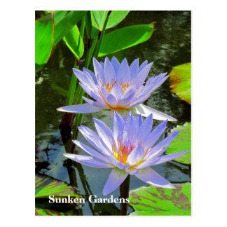 SG Pair of BLUE water lilies #101  00101 Postcard