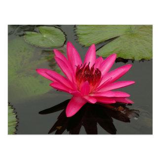 SG Pink Water Lily #50n  0500 Postcard