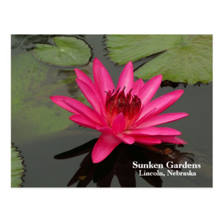 SG Pink Water Lily #57nw  0057 Postcard