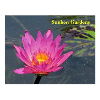 SG Purple water lily #202   202202 Postcard