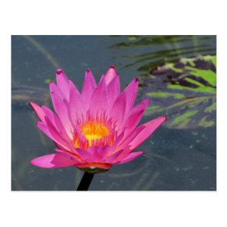 SG Purple water lily #203n   0203 Postcard