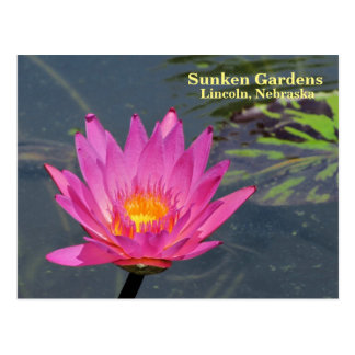 SG Purple water lily #300 Postcard
