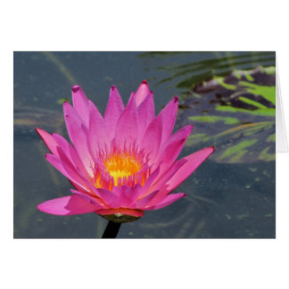 SG Purple water Lily Blank Card #900   0900