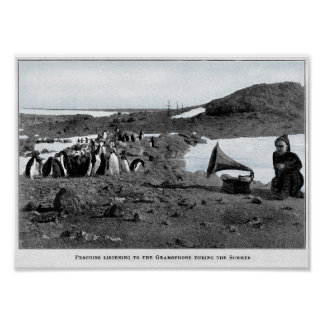 Shackleton in Antarctic Gramophone with Penguins Poster