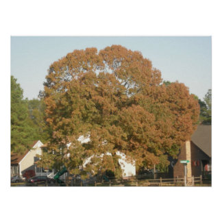 shade tree poster