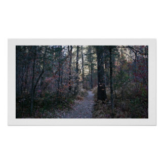 Shaded Forest Trail Print