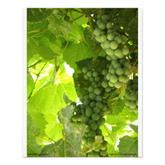 Shaded Grapes Photograph