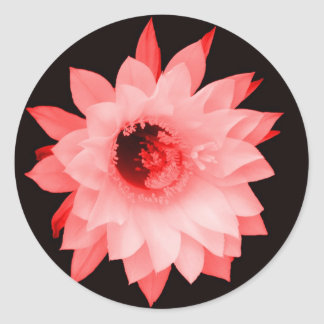 SHADES OF PINK RED FLORAL BLOOM STICKER
