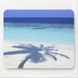 Shadow of Palm Tree