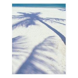 Shadow of Palm Tree 2 Postcard