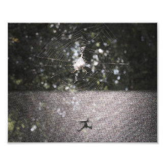 Shadow of the Orb Weaver Photo Print