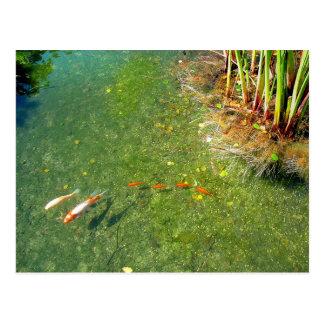 Shadows and Fish Postcard