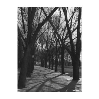 Shadows and Trees Canvas Print