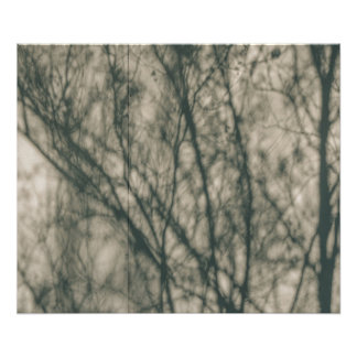 Shadows of Winter Foliage Art Photo