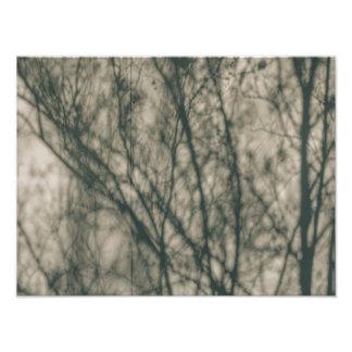 Shadows of Winter Foliage Photo