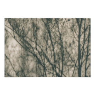 Shadows of Winter Foliage Photo Art
