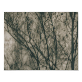 Shadows of Winter Foliage Poster