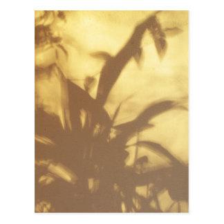 Shadows Post Card