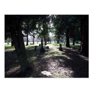 Shadowy Cemetery Postcard