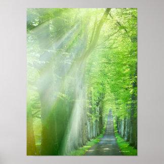 Shafts of Sunlight Poster
