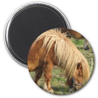 Shaggy Shetland Pony Magnet