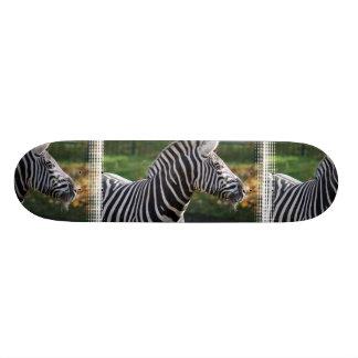 Shaggy Zebra Skateboard Decks