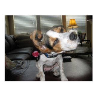 Shake it off beagle postcard