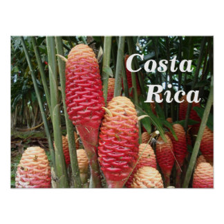 Shampoo Ginger Costa Rica Posters