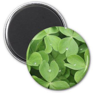 Shamrock Clover Leaves 6 Cm Round Magnet