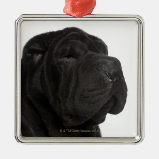 Shar Pei (1 year old) close-up Metal Ornament