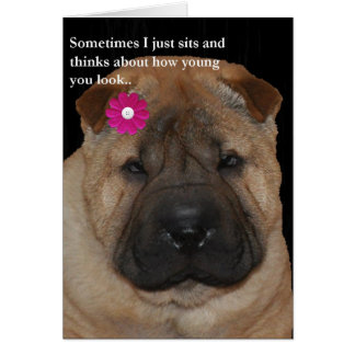 Shar Pei Birthday card-Just Sits Card
