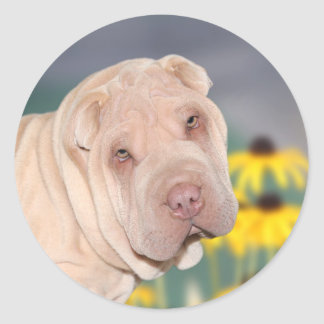 Shar Pei face Classic Round Sticker