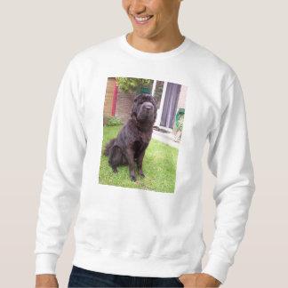 Shar pei longhair sitting sweatshirt