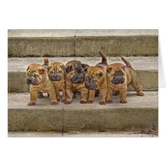 Shar-Pei pups 5 in a row card