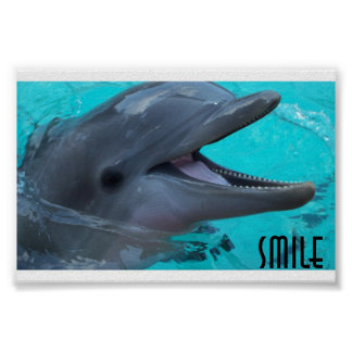 Share a Dolphin's Smile Poster