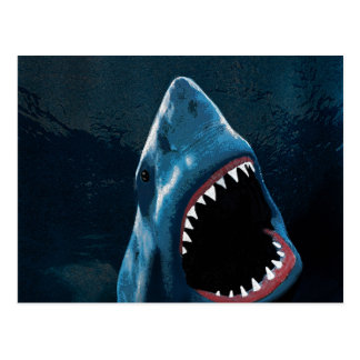 Shark attack postcard