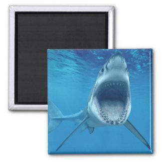 Shark attack! square magnet