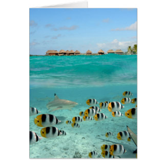 Shark chasing butterfly fish greeting card