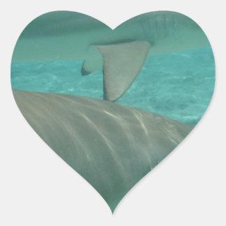shark heart sticker
