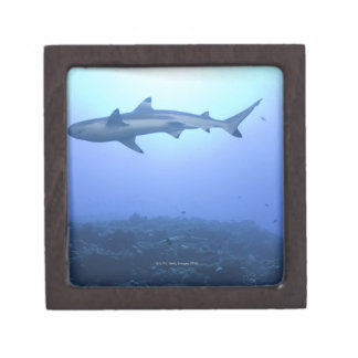 Shark in ocean, low angle view premium gift box