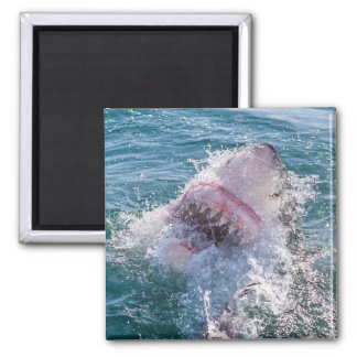 Shark in the water magnet