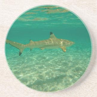 Shark in will bora will bora beverage coaster