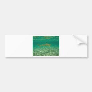 Shark in will bora will bora bumper sticker