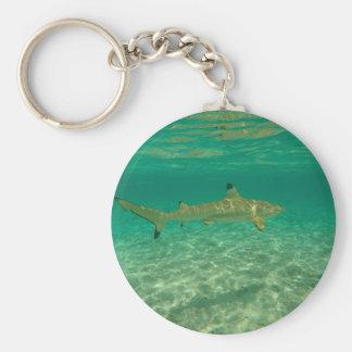 Shark in will bora will bora key ring