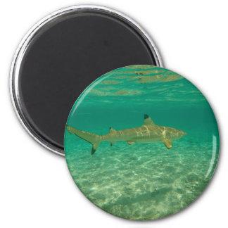 Shark in will bora will bora magnet