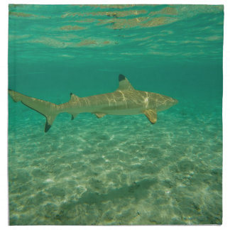 Shark in will bora will bora napkin