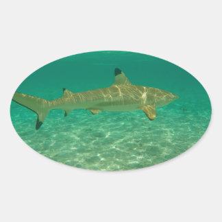 Shark in will bora will bora oval sticker